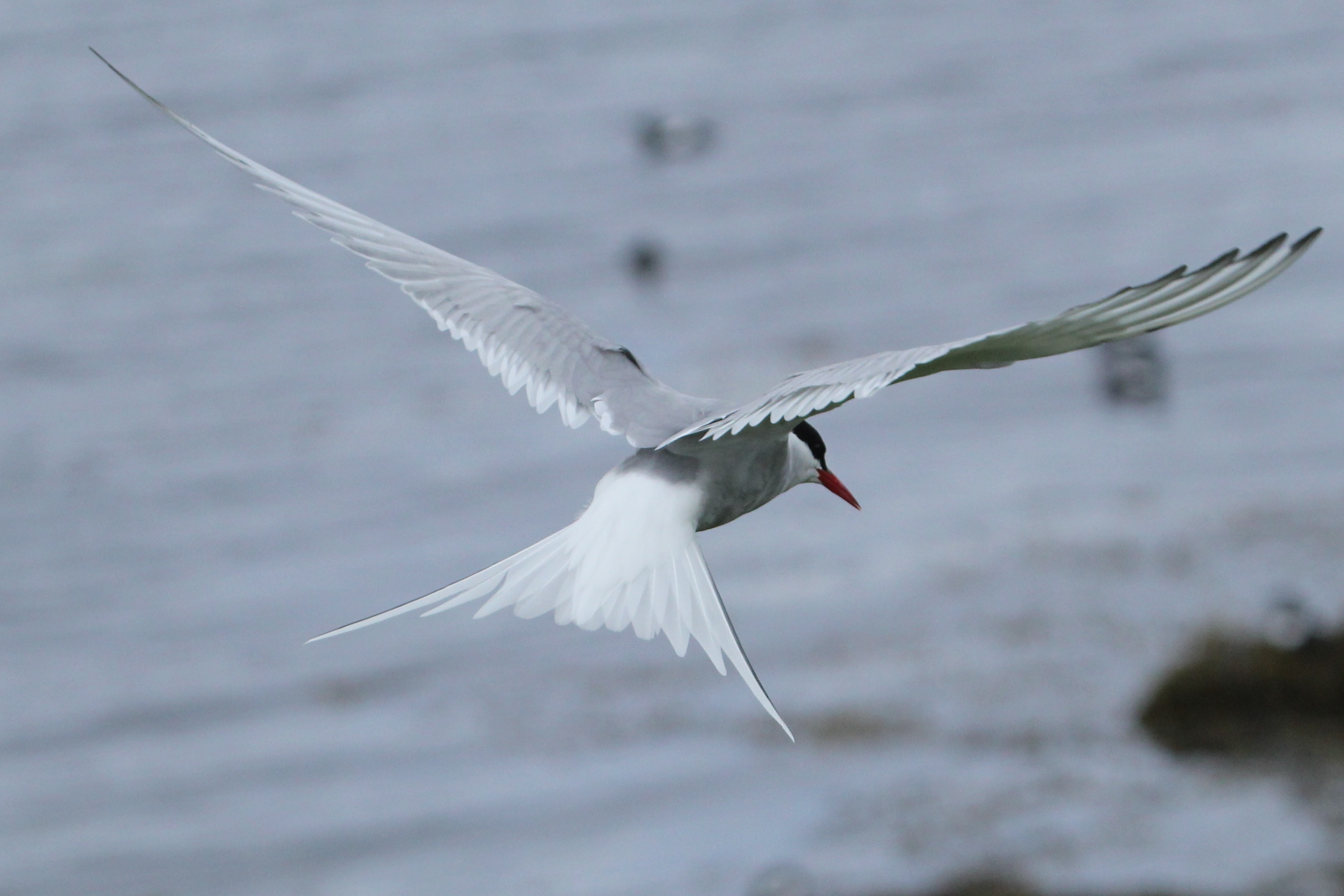 Tern in slow speed configuration